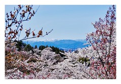 View through sakura to mount Azuma from Hanamiyama (Tatters ) Tags: trees snow mountains japan spring framed frame cherryblossom sakura hanami whiteframe hanamiyama