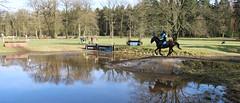 2016 Horses National (Steenvoorde Leen - 3.4 ml views) Tags: maarsbergen doorn utrechtseheuvelrug 2016 landgoed netherlands pferde paarden springen cross horse horses hindernis fench jumping reiten maarsbergen2016 sgw