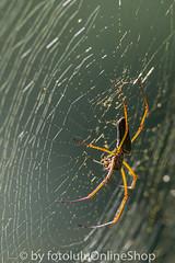 Argentinien_Insekten-88 (fotolulu2012) Tags: tierfoto