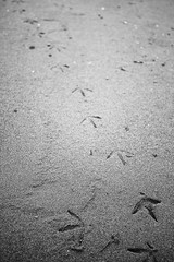 A Walk on the Beach (marq4porsche) Tags: ocean california bw white black beach nature contrast foot sand natural sandy steps footsteps foots