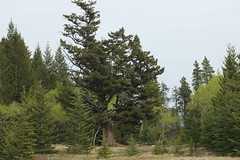 On my travels (davebloggs007) Tags: park canada tree alberta valley bow provincial