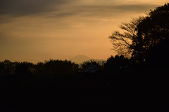 20160406_021_2 () Tags: silhouette