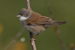 Keyhaven 230416-10 (Keith Seymour1) Tags: birds blurred lowcontrast infocus keyhaven mediumquality