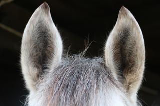 Dettagli equini - Horse datails