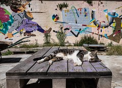(Assun) Tags: barcelona cat abril gato gat laescocesa