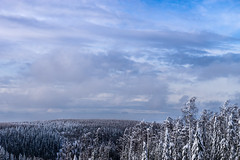 Cold Forest (TribeChristals) Tags: blue winter sky snow tree clouds forest landscape skiing outdoor lumi talvi pilvet j rinne taivas laskettelu