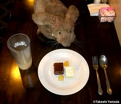Dr. Takeshi Yamada and Seara (Coney Island Sea Rabbit) at the Seaport Buffet Chinese restaurant in Sheepshead Bay in Brooklyn, NY on May 13, 2015.  20150513 137=2030C= (searabbits23) Tags: ny newyork sexy celebrity rabbit art hat fashion animal brooklyn sushi asian coneyisland japanese star restaurant tv google king artist dragon god manhattan famous gothic goth uma ufo pop taxidermy vogue cnn tuxedo bikini tophat unitednations playboy entertainer oddities genius mermaid amc mardigras salvadordali performer unicorn billclinton seamonster billgates aol vangogh curiosities sideshow jeffkoons globalwarming mart magician takashimurakami pablopicasso steampunk damienhirst cryptozoology freakshow seara immortalized takeshiyamada roguetaxidermy searabbit barrackobama ladygaga climategate  manwithrabbit