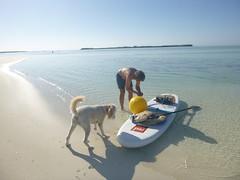 Man's best research assistant (MyFWC Research) Tags: fish conservation research bahamas larvae genetics abaco marinelife bonefish fwc albulavulpes lighttrap leptocephalus myfwc myfwccom bonefishandtarpontrust