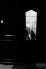 Street Photography - Modena 314 (Giorgio Meneghetti - Street Photography) Tags: blackandwhite nikon df foto streetphotography modena biancoenero nikonclubit