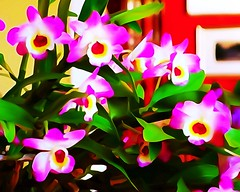 Orchids in Bloom / Abstracted (steveartist) Tags: stevefrenkel phototoaster sonydscrx100 sonywatercolorfilter