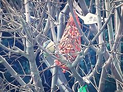 DSC02035 (1) (Enrico Luigi Delponte) Tags: birds sony vogels uccelli sonyfuncamera