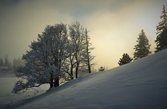 White tree (yanoche) Tags: winter white snow switzerland suisse hiver jura neige vaud raquettes orblanc
