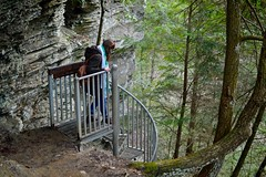 Descend (imkaifilbey) Tags: county trees cliff green metal 35mm spiral person rocks tennessee descent falls staircase descend grundy greeter