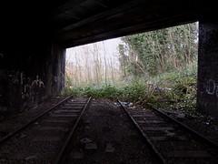 The Green Line (Jason_Hood) Tags: disused abandoned railway railroad southstaffordshireline southstaffordshirerailway