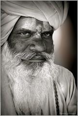 1511 Inde_XT10 1344 (andre.callewaert) Tags: pushkar vache inde chevre singe ceremonie sadous