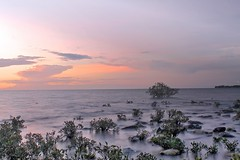 12 by 12 #11 .......Mangroves at Mindil (g*treefrog) Tags: sunset mangroves mindilbeach