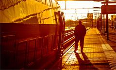One one leg :) (zilverbat.) Tags: travel wallpaper people urban sun sunlight dutch station lights town scenery perron ns postcard citylife streetphotography sunny streetlife streetscene denhaag visit stop timelife bookcover wintertime cinematic thehague trein halte hs spoor intercity streetshot urbanlife mensen vervoer hollandsspoor citytrip streetcandid lahaye peopleinthecity tripadvisor straatfotografie treinspoor straatfotograaf zilverbat elvinhagekpnplanetnl