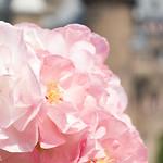 "Zoete bloemen <a style=""margin-left:10px; font-size:0.8em;"" href=""http://www.flickr.com/photos/62259267@N04/24451648599/"" target=""_blank"">@flickr</a>"
