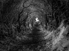 Ballynoe Hedges (Eskling) Tags: ireland nikon tunnel hedge northern stonecircle codown ballynoe darkhedges