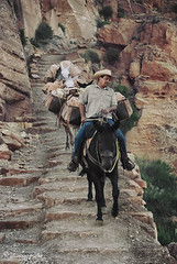 phantom rancher (cherryspicks) Tags: travel people man nature cowboy outdoor path grandcanyon canyon trail mules phantomranch southkaibab