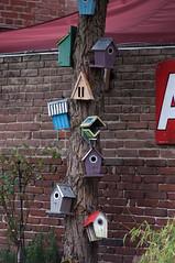 Anybody home? - Sigma-Z 135mm 2.8 Pantel lenstest (leunkstar) Tags: house tree bird colors birds colours birdhouse sigma feeder tele 28 135 ais birdhouses 135mm telelens lenstest d90 pantel nikond90 sigmaz pantell sigmapantel135mm28