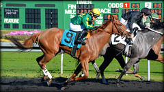 Hopes Love @ Golden Gate Fields (billypoonphotos) Tags: california horses horse news love hope golden bay photo nikon gate san francisco track martin sister picture racing stretch chrome hopes area fields ricardo chestnut hudson gonzalez synthetic thoroughbred coburn 2016 tapeta d5200 billypoon billypoonphotos hopeslove