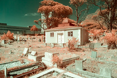 IMG_1843s-2 (francois f swanepoel) Tags: saint southafrica shrine graf islam tomb saints observatory infrared dervish obs quran koran quoran dargah mazaar grooteschuur taphophilia kramat gamediyahcemetery circleofsaints circleofislam westerncapecemetery