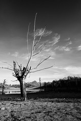 Bare (jimmomo) Tags: trees lake mountains alberi italia montagna biancoenero abruzzo campotosto laghi