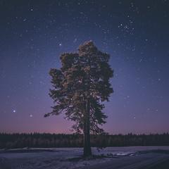Quiet (unijaz) Tags: winter snow cold tree nature night suomi finland stars landscape outdoor fineart serene kainuu puolanka