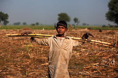 Crucified (Awais Yaqub) Tags: poverty pakistan boy field agriculture childlabour sugarcane harvesting southasia crucified