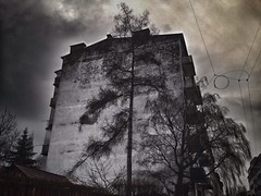 (mi_pe.) Tags: austria graz weepingwillow iphone trauerweide
