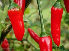 Red Hot Chili Peppers (gjaviergutierrezb) Tags: red hot chili peppers redhotchilipeppers