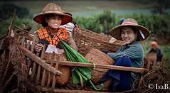 DSC_1031 (i.borgognone) Tags: people burma myanmar agriculture campagne birmanie