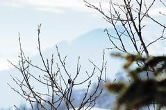 aesthetics (Nicole Favero) Tags: camera bridge blue sky white mountain snow tree cute love nature photography photo reflex amazing cool nikon mine edited awesome forever cuteness passage habitat edit lightroom zoncolan nikond5000 nicolefavero