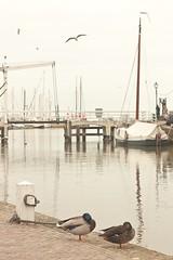 Monnickendam haven (Xicu Piera) Tags: sea haven relax peace ships ducks calm