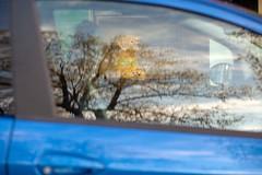 (Jonny Dunbar) Tags: bluecar treereflections morningsideedinburgh guidedogreflections