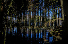 colours into the woods (henke_lund) Tags: blue trees sunset colour tree water grass forest mirror reflex still woods warm outdoor deep sunny calm wilderness calmness