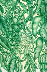 (Elsita (Elsa Mora)) Tags: green art nature illustration pen design natural handmade drawing foliage ballpointpen elsita elsamora greenballpointpen