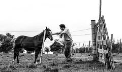 'irmo de pelo e crina..' (Suzana Fernandes Fotografia) Tags: horse rural de caballo amigo carinho liberdade pasto irmo campo amizade cerca inverno cavalo sul pampa vento gaucho potro simplicidade arame campesino aguiar gacho manso potra egua dilermando campeiro