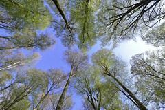 Renouveau (Valentin le luron) Tags: nature nikon suisse lausanne e yves paysage 800 arbre printemps verdure vaud contreplonge romandie paudex renouveau froideville 20160419