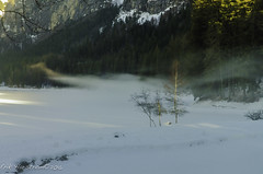 Erik Harstrom-Winter 2016-148 (Erik Harstrm) Tags: lake france tree smog lac fvrier hautesavoie 2016 rhnealpes montriond erikharstrm
