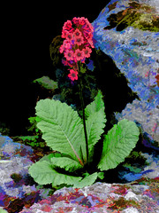 Out of the Shadows (Steve Taylor (Photography)) Tags: blue shadow red plant black flower green art leaves sunshine rock digital sunny mauve