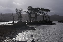 I can see the pines are dancing (pauldunn52) Tags: light west clouds scotland north pines brooding loch scots assynt