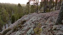 Cliffs near the northern end of Lake Suolikas (Ollila, Vihti, 20151212) (RainoL) Tags: winter cliff forest finland geotagged nationalpark december fin ollila uusimaa 2015 nyland vihti suolikas vichtis nuuksionationalpark 201512 20151212 geo:lat=6033569962 geo:lon=2456175507