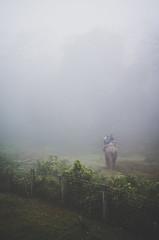 IMGP1303 (mouryach) Tags: nepal chitwan sarangkot