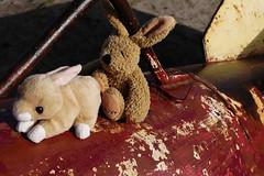 Watership Down 32 -Goodbye crazy World_Web (berni.radke) Tags: moon rabbit bunny river mond hazel raft buck fluss apollo watershipdown kaninchen fiver photostory pitfall flos rammler cony seepferd falle lachmwe kehaar richardadams enborne wildkaninchen untenamfluss