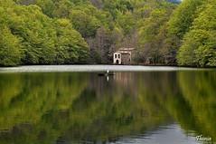 Santa Fe del Montseny (Gatodidi) Tags: barcelona santa parque naturaleza verde rio del landscape agua nikon natural paisaje pantano ave reflejo catalunya fe montaa parc niebla catalua cascada montseny garza d90 paisatje