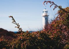 Good old Subbe (calmingechoes) Tags: sky lighthouse color coast bush nikon sweden outdoor depthoffield clearsky