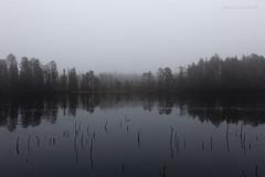 Ikiajassa (ikithule) Tags: trees lake reflection landscape iceland rovaniemi maisema autmn syksy jrvi usva puita heijastus jannemaikkula