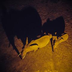 Safari, Elephants in the Night (robseye76) Tags: africa park holiday elephant kenya safari national elephants vacations kenia tsavo wakacje afryka